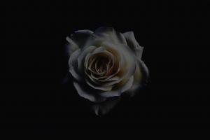 Dark_Parallax
